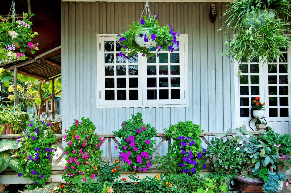 Ngôi nhà gỗ xinh xắn với vườn hoa hồng rực rỡ sắc màu - 11